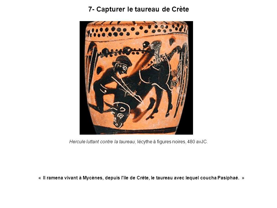 7- Capturer le taureau de Crète Hercule luttant contre la taureau, lécythe à figures noires, 480 avJC. « Il ramena vivant à Mycènes, depuis l'île de C