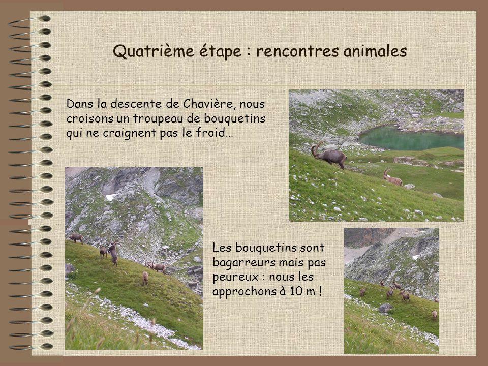 Quatrième étape : rencontres animales Dans la descente de Chavière, nous croisons un troupeau de bouquetins qui ne craignent pas le froid… Les bouquet