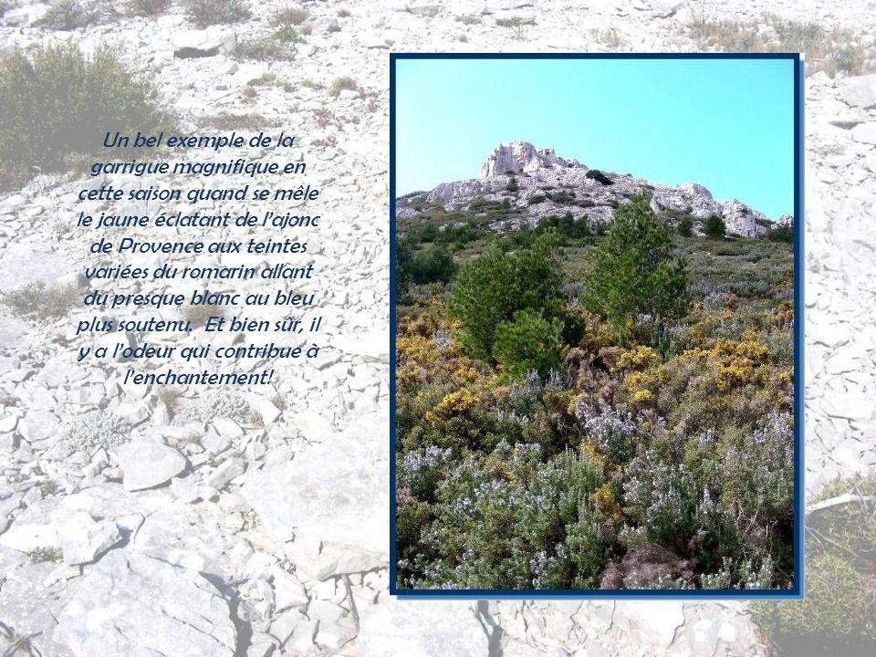 Au fond, sur la gauche, le pic de Bertagne qui constitue lextrémité du massif de la Sainte-Baume…