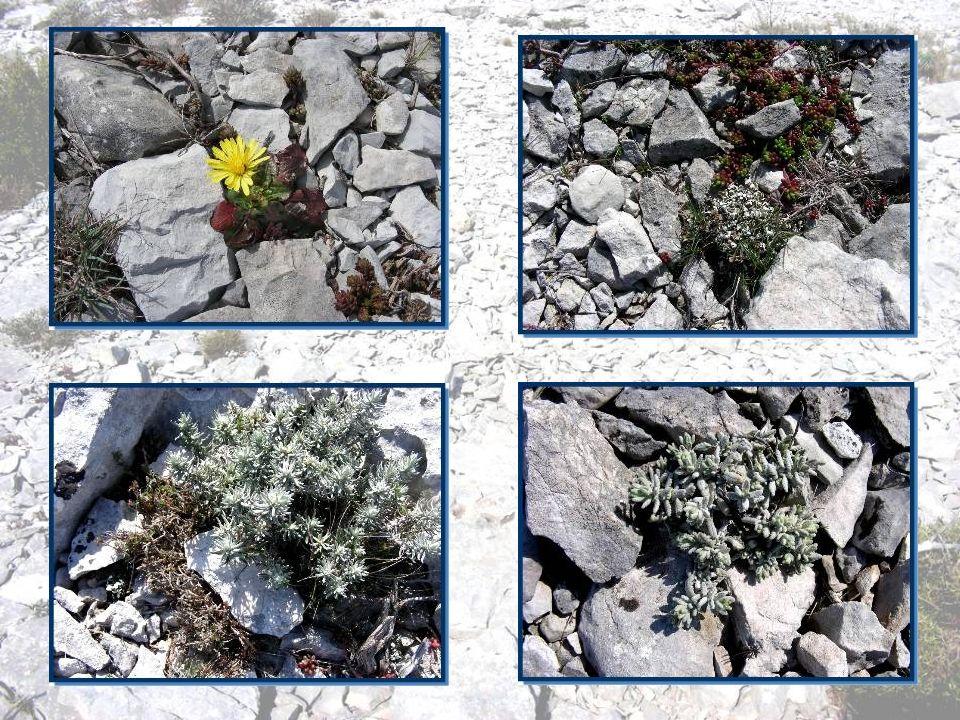 Sur cet espace si aride, on est surpris de découvrir une maigre mais très belle végétation… Je prends le temps de lexaminer durant la halte du pique-nique.