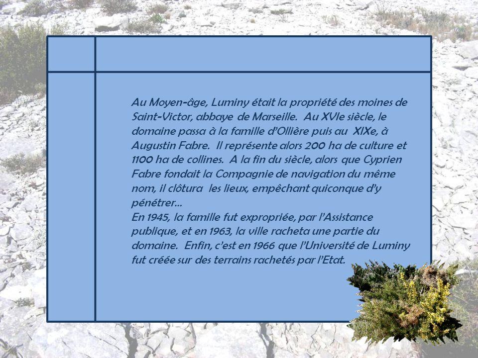 Située à la périphérie de Marseille, lUniversité de Luminy marquera notre point de départ alors que nous passons devant lEcole supérieure des Arts de