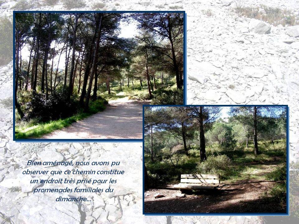 Au départ, nous empruntons le sentier de Surgiton aménagé sur près de 3 km pour permettre de mieux découvrir la géologie, la flore et la faune du site