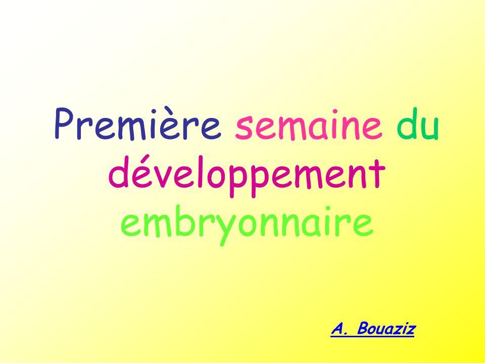 Première semaine du développement embryonnaire A. Bouaziz