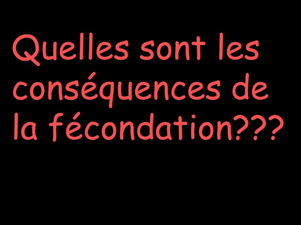 Quelles sont les conséquences de la fécondation???