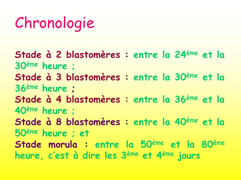 Chronologie Stade à 2 blastomères : entre la 24 ème et la 30 ème heure ; Stade à 3 blastomères : entre la 30 ème et la 36 ème heure ; Stade à 4 blasto