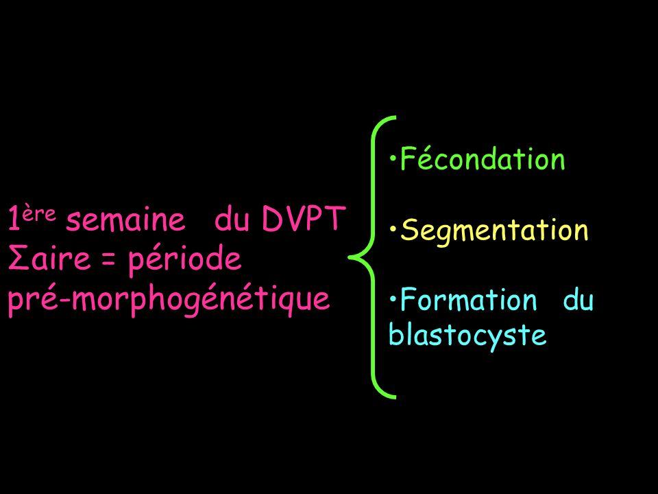 1 ère semaine du DVPT Σaire = période pré-morphogénétique Fécondation Segmentation Formation du blastocyste