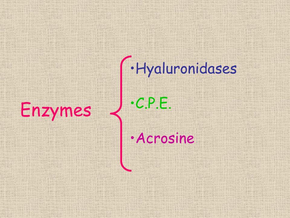 Enzymes Hyaluronidases C.P.E. Acrosine