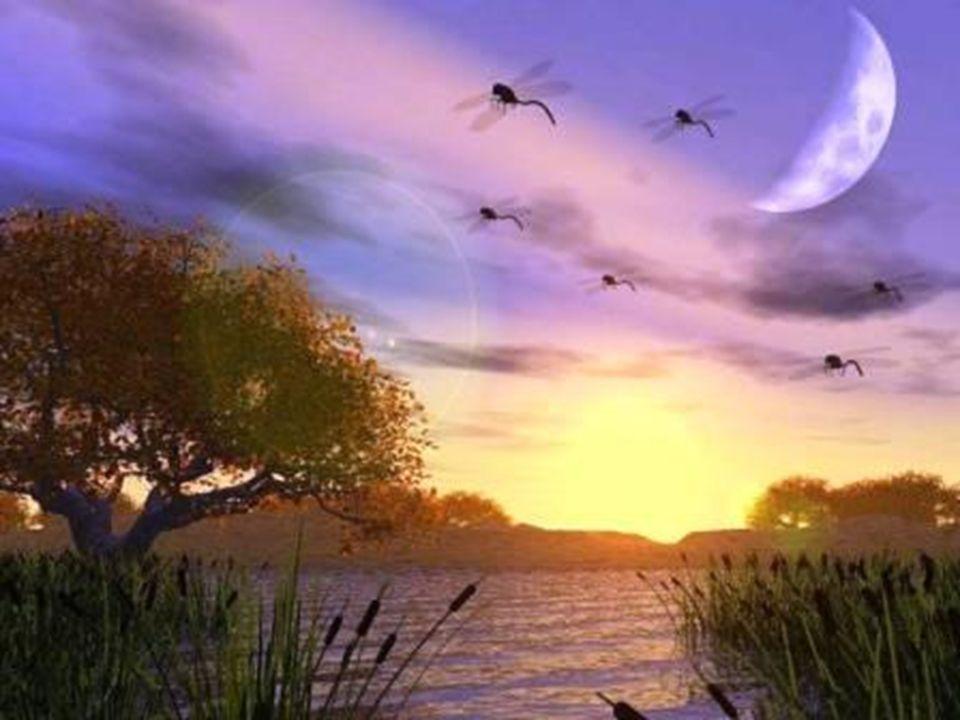 LA TERRE : UN DISQUE FLOTTANT SUR L' EAU 7ème siècle av JC THALÈS DE MILET Le Philosophe, Scientifique et Mathématicien grec reprend les conceptions a