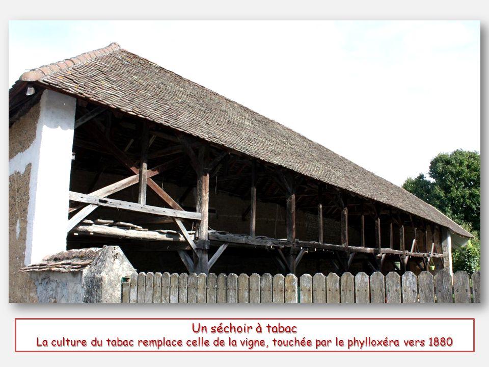 Un séchoir à tabac La culture du tabac remplace celle de la vigne, touchée par le phylloxéra vers 1880