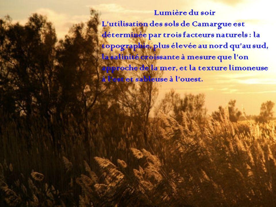 Lumière du soir Lutilisation des sols de Camargue est déterminée par trois facteurs naturels : la topographie, plus élevée au nord quau sud, la salini
