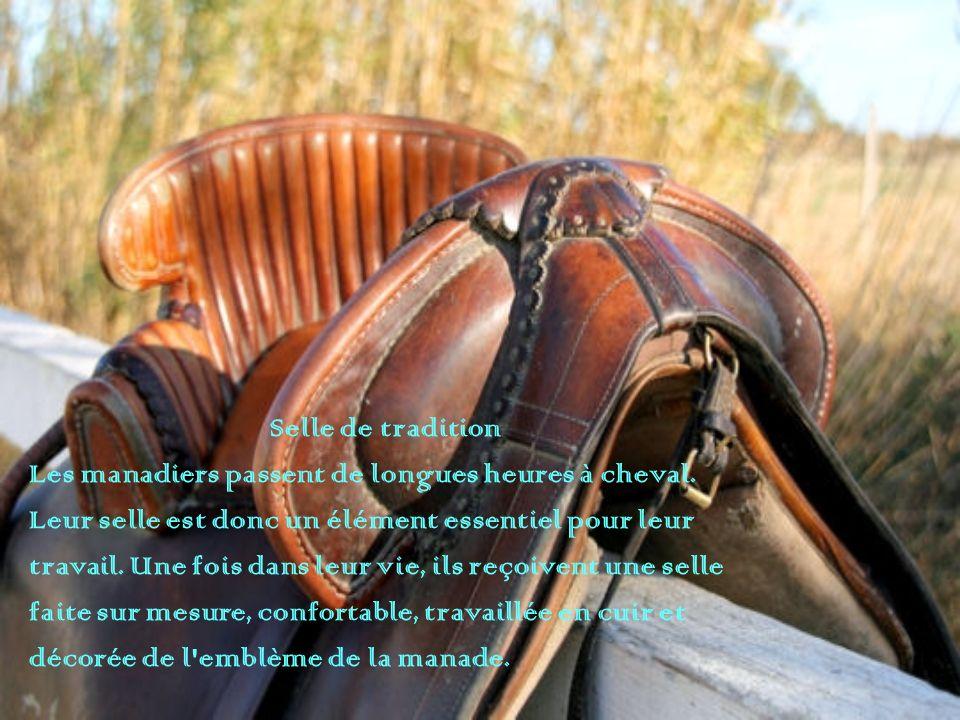 Selle de tradition Les manadiers passent de longues heures à cheval. Leur selle est donc un élément essentiel pour leur travail. Une fois dans leur vi