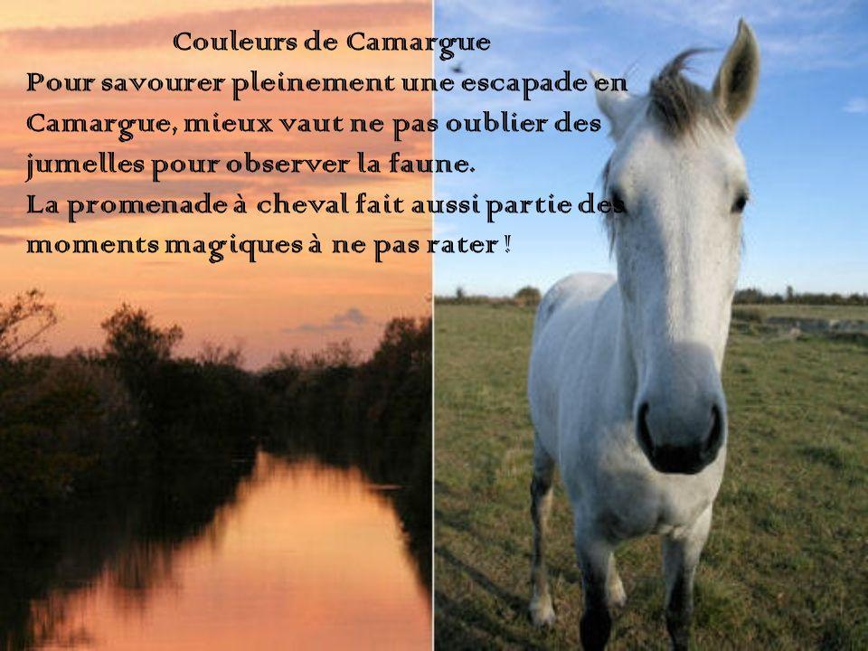 Couleurs de Camargue Pour savourer pleinement une escapade en Camargue, mieux vaut ne pas oublier des jumelles pour observer la faune. La promenade à