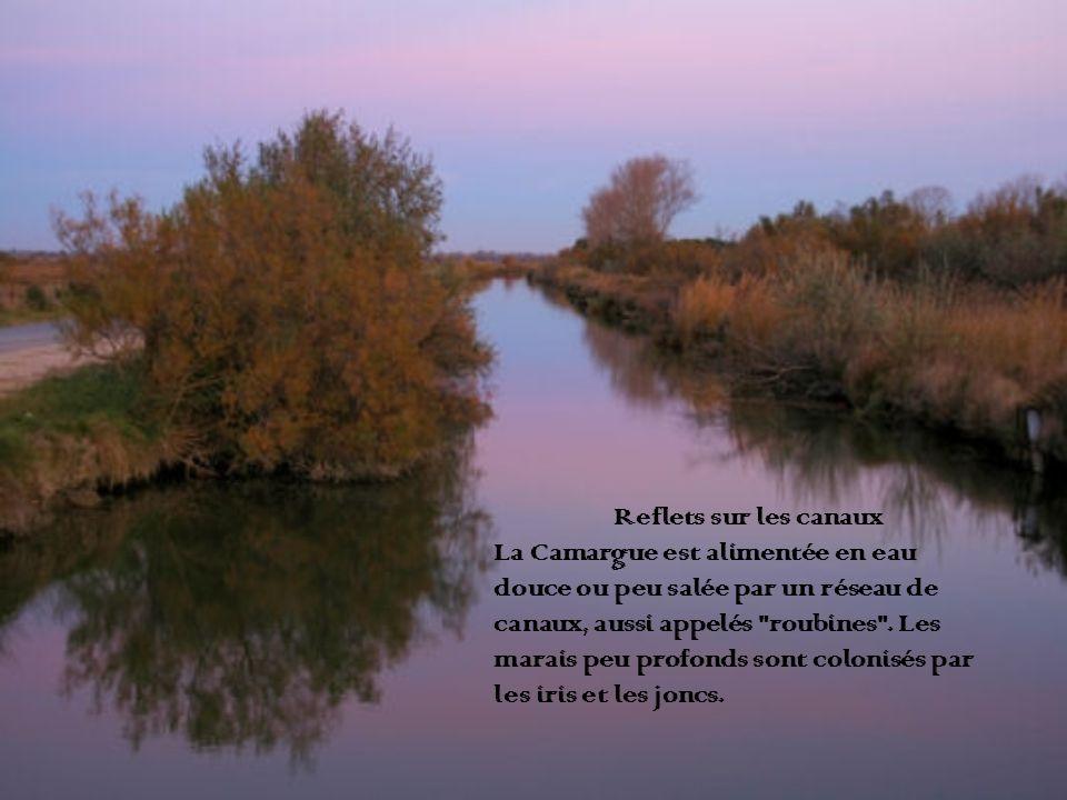 Reflets sur les canaux La Camargue est alimentée en eau douce ou peu salée par un réseau de canaux, aussi appelés