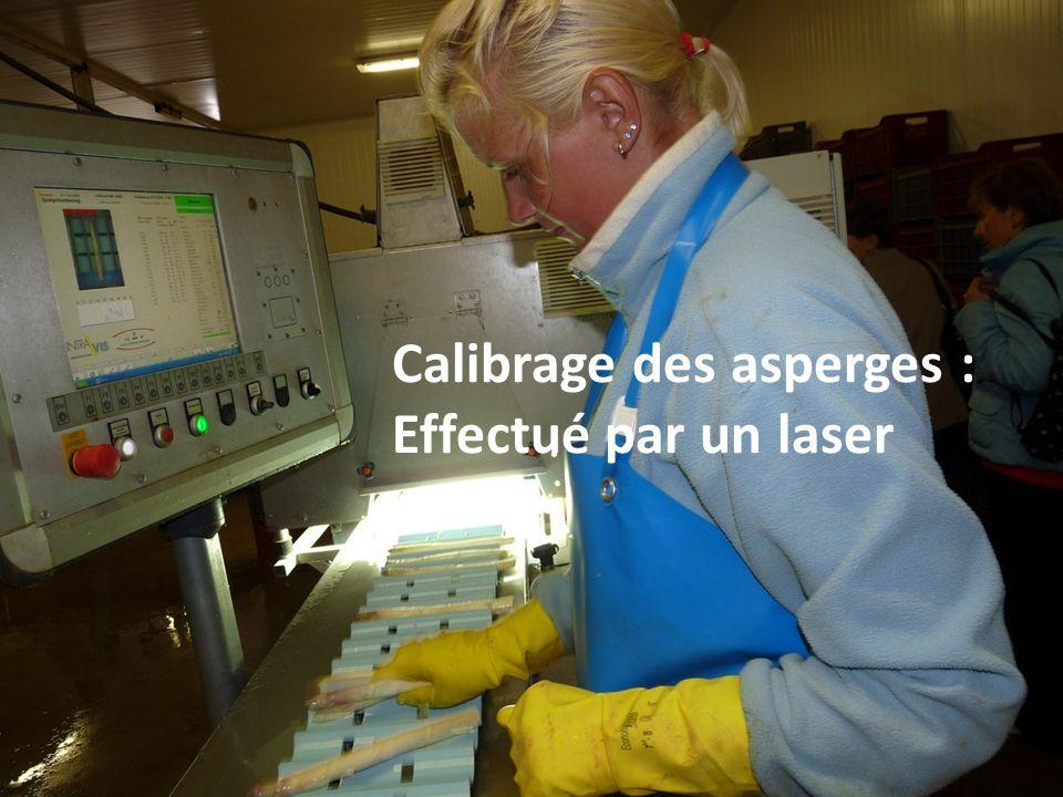 Suite du calibrage : Chaque asperge tombe dans sa catégorie.