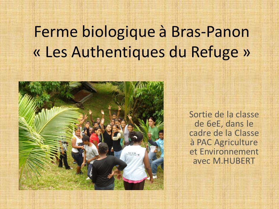 Ferme biologique à Bras-Panon « Les Authentiques du Refuge » Sortie de la classe de 6eE, dans le cadre de la Classe à PAC Agriculture et Environnement