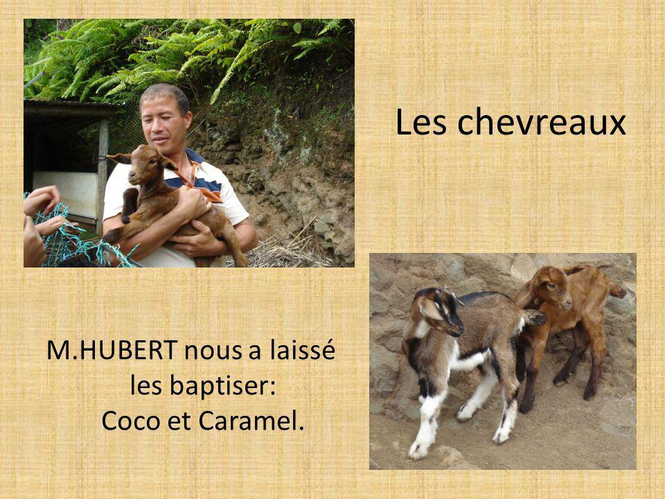 Les chevreaux M.HUBERT nous a laissé les baptiser: Coco et Caramel.