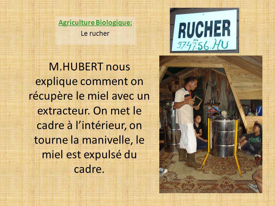 M.HUBERT nous explique comment on récupère le miel avec un extracteur. On met le cadre à lintérieur, on tourne la manivelle, le miel est expulsé du ca