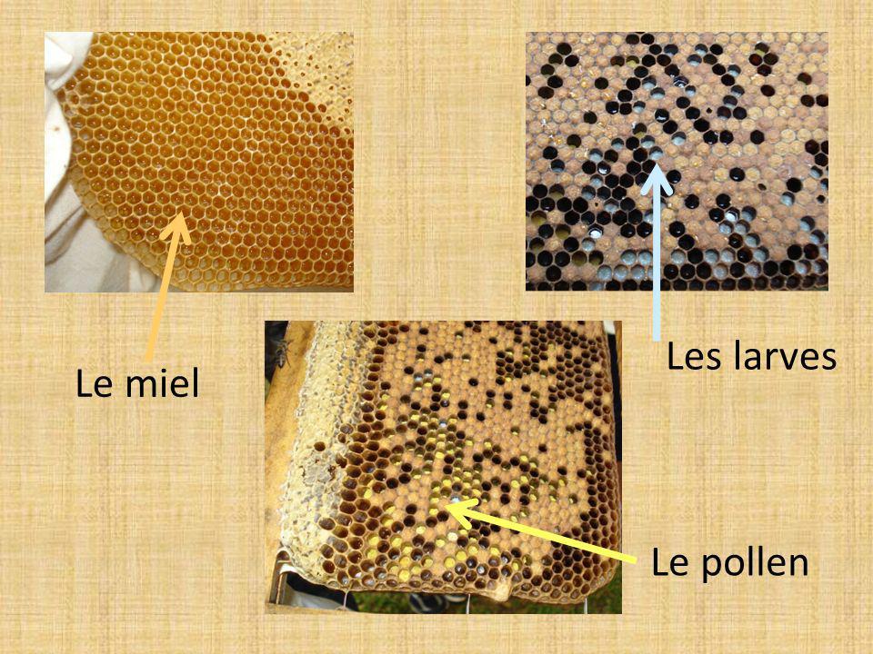 Le miel Les larves Le pollen