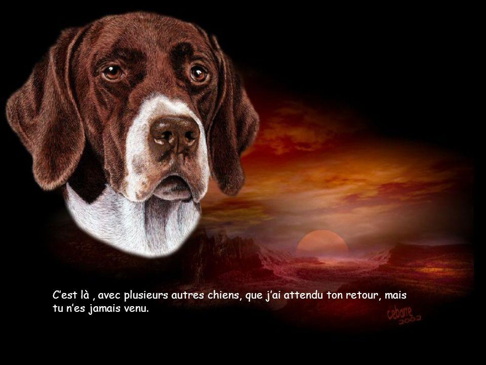 Cest là, avec plusieurs autres chiens, que jai attendu ton retour, mais tu nes jamais venu.