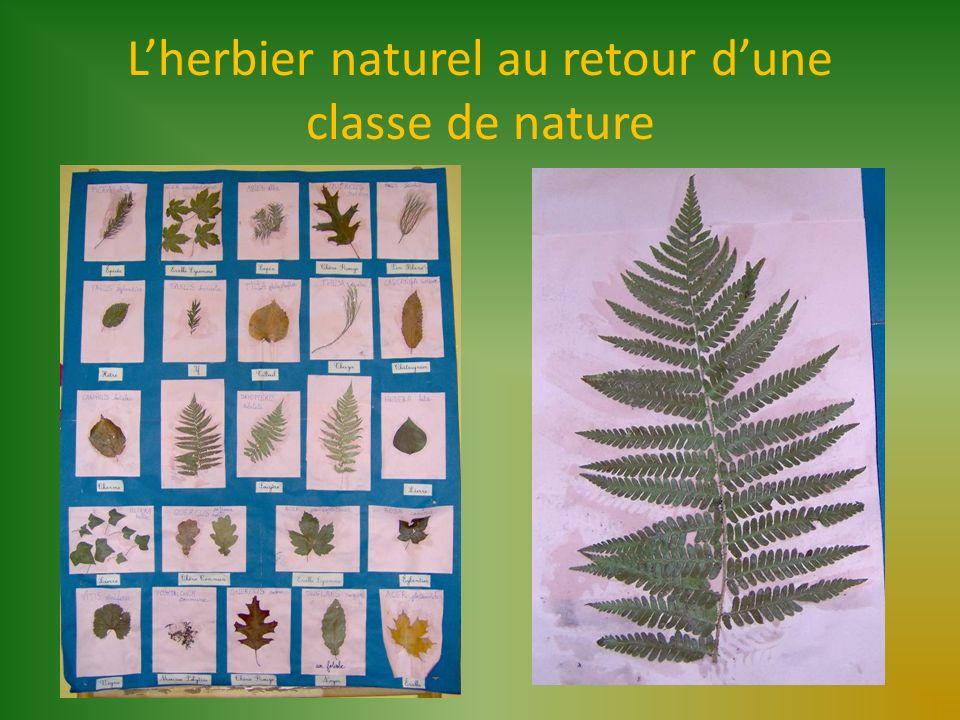 Lherbier naturel au retour dune classe de nature