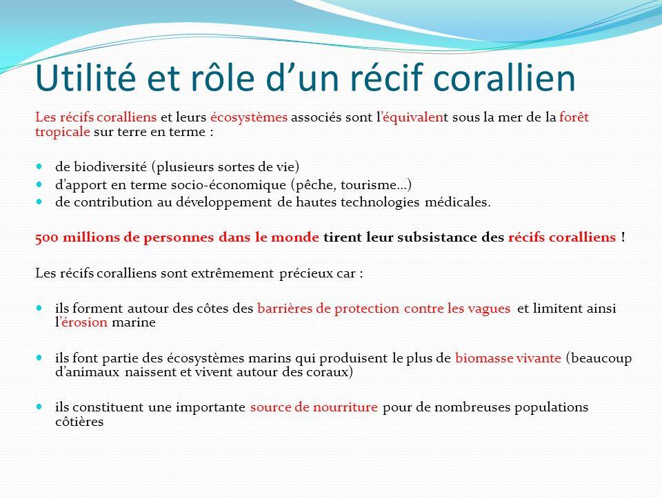 Utilité et rôle dun récif corallien Les récifs coralliens et leurs écosystèmes associés sont léquivalent sous la mer de la forêt tropicale sur terre e