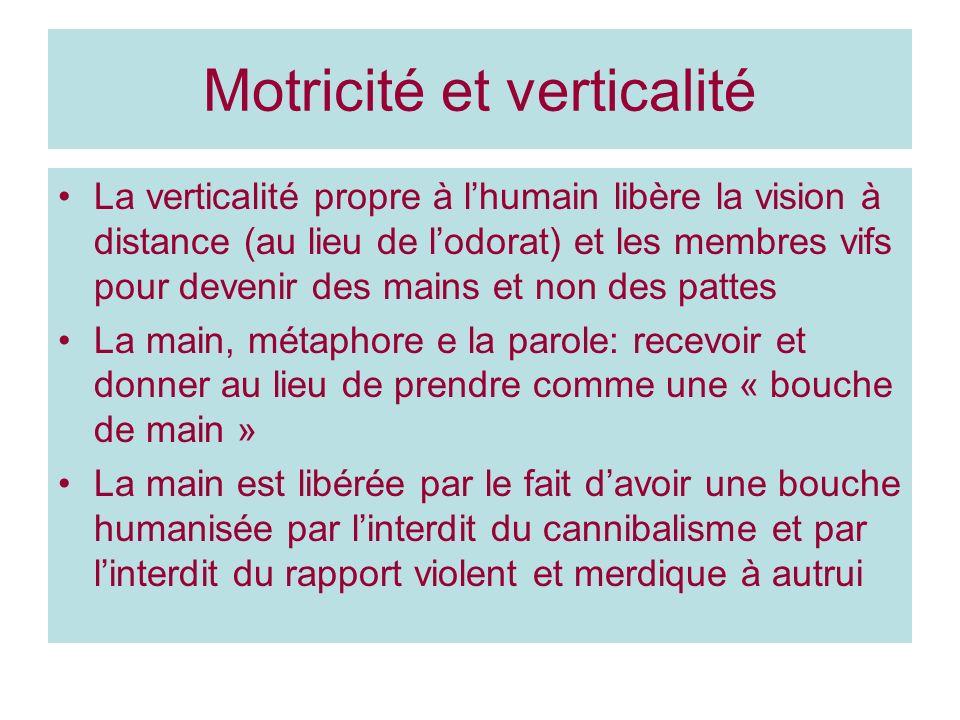 Motricité et verticalité La verticalité propre à lhumain libère la vision à distance (au lieu de lodorat) et les membres vifs pour devenir des mains e