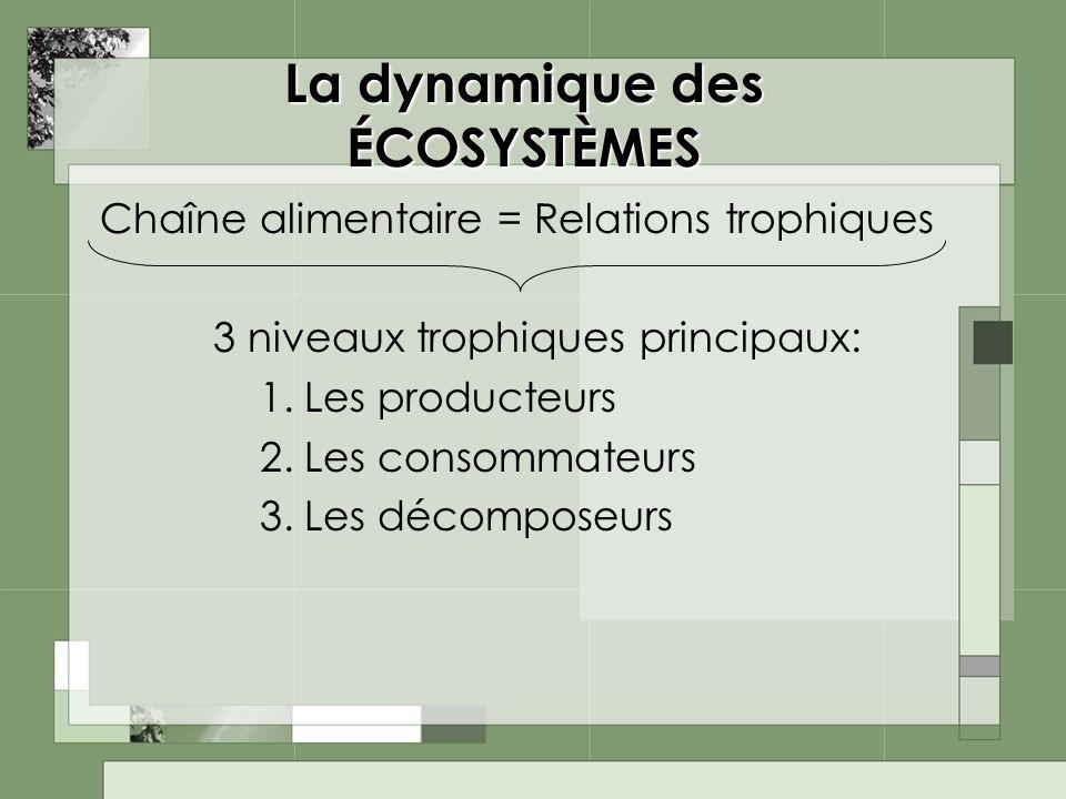 La dynamique des ÉCOSYSTÈMES Chaîne alimentaire = Relations trophiques 3 niveaux trophiques principaux: 1.Les producteurs 2.Les consommateurs 3.Les dé