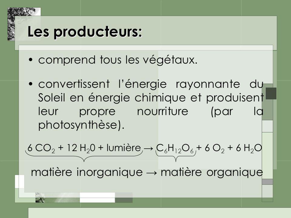 Les producteurs: comprend tous les végétaux. convertissent lénergie rayonnante du Soleil en énergie chimique et produisent leur propre nourriture (par