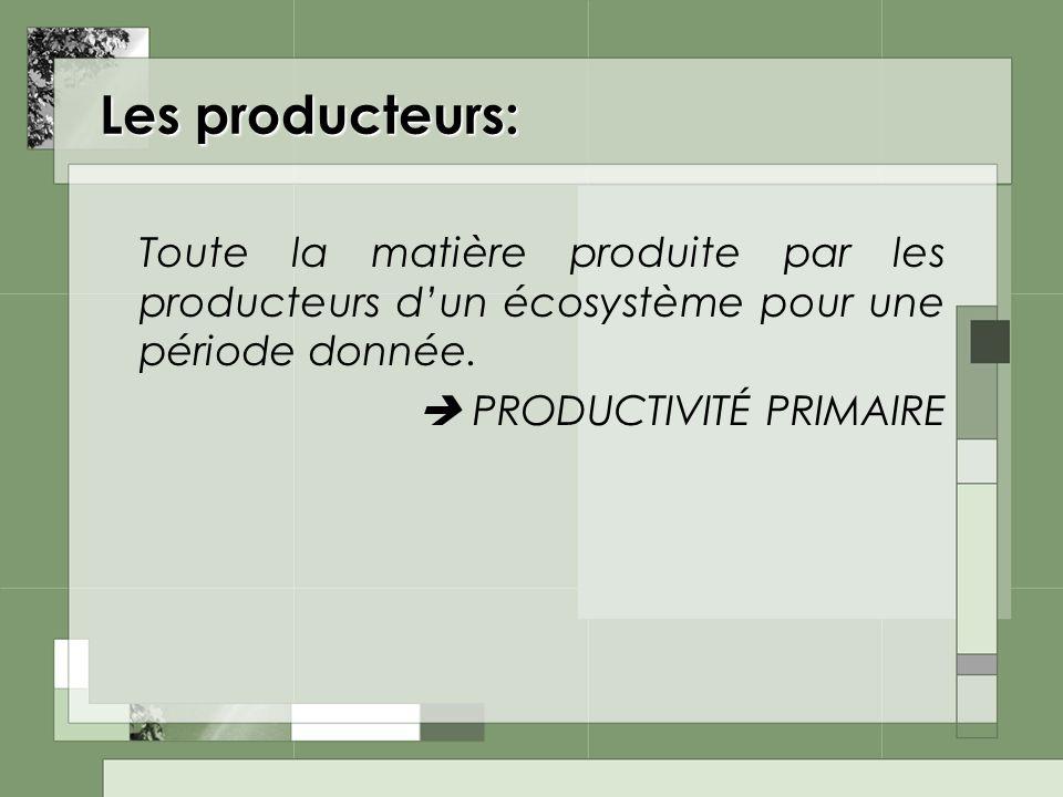 Les producteurs: Toute la matière produite par les producteurs dun écosystème pour une période donnée. PRODUCTIVITÉ PRIMAIRE