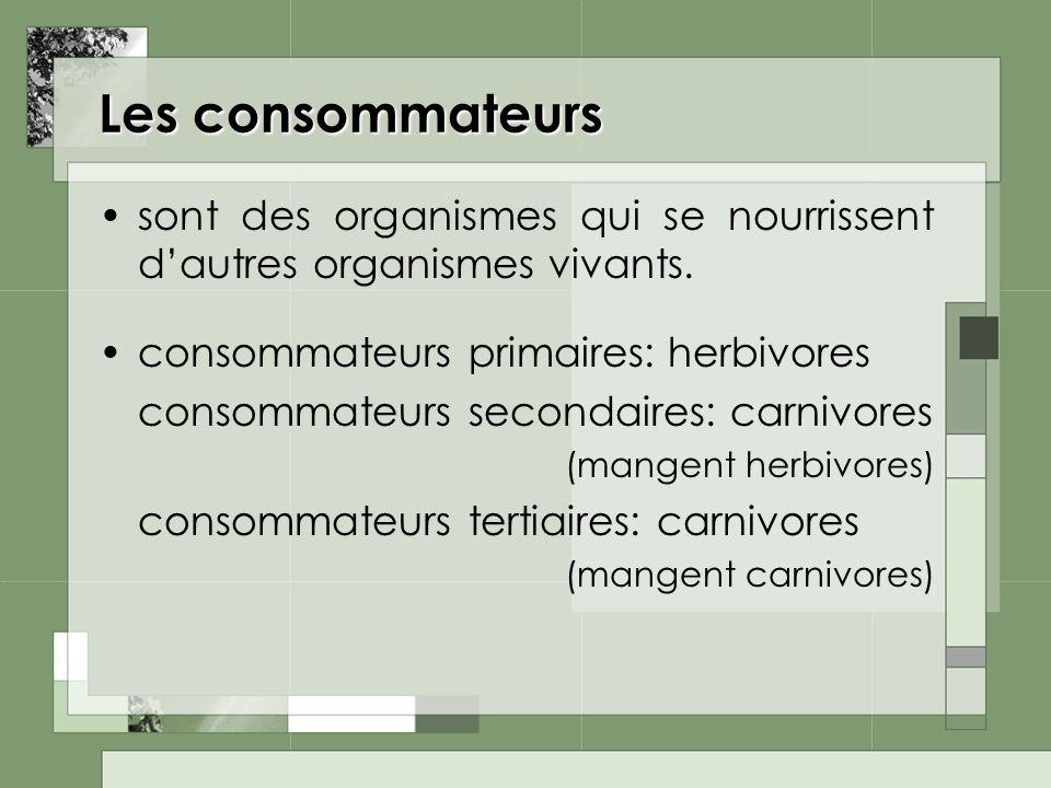 Les consommateurs sont des organismes qui se nourrissent dautres organismes vivants. consommateurs primaires: herbivores consommateurs secondaires: ca