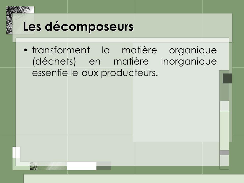 Les décomposeurs transforment la matière organique (déchets) en matière inorganique essentielle aux producteurs.