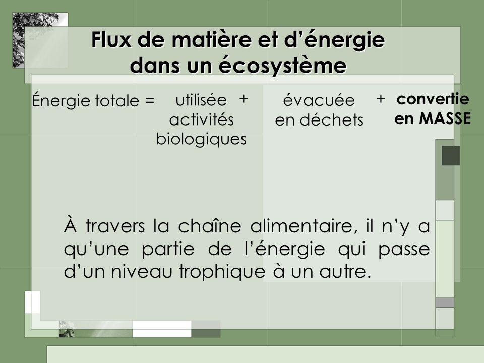 Flux de matière et dénergie dans un écosystème À travers la chaîne alimentaire, il ny a quune partie de lénergie qui passe dun niveau trophique à un a