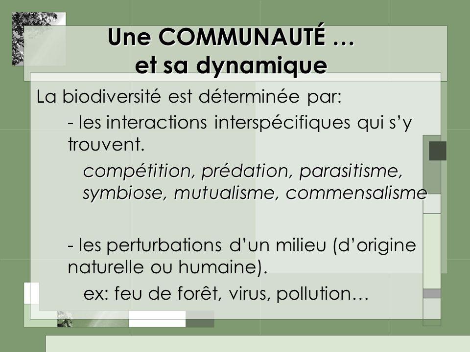 Une COMMUNAUTÉ … et sa dynamique La biodiversité est déterminée par: - les interactions interspécifiques qui sy trouvent. compétition, prédation, para