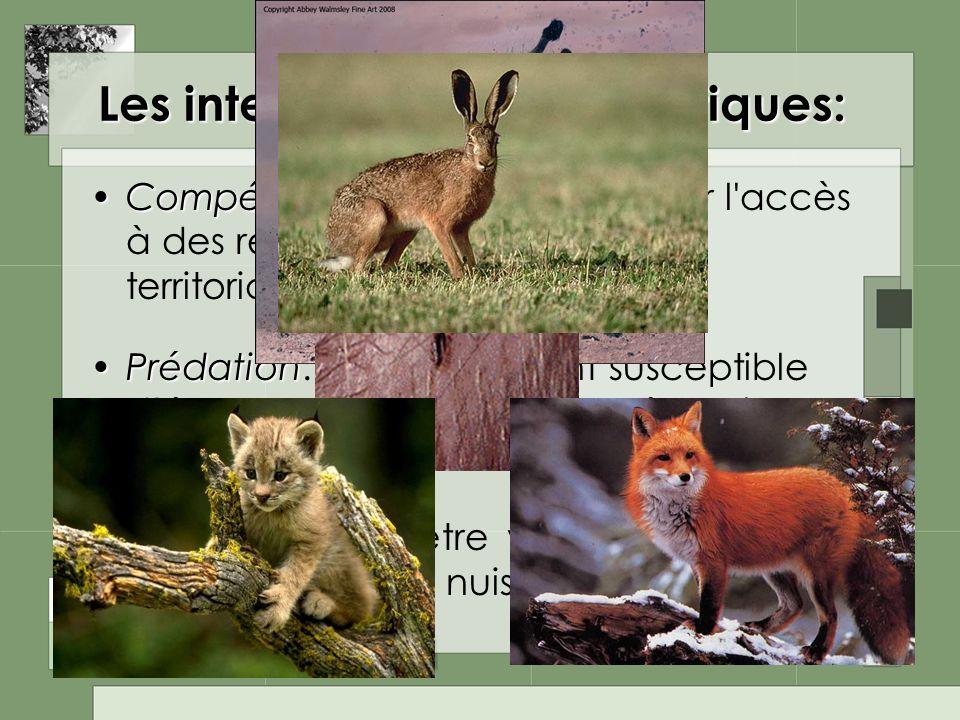 Les interactions interspécifiques: CompétitionCompétition: concurrence pour l'accès à des ressources alimentaires, territoriales, partenariales etc. P