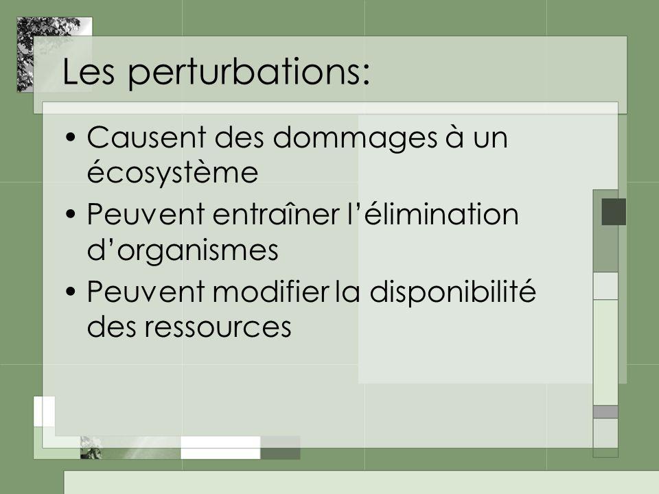 Les perturbations: Causent des dommages à un écosystème Peuvent entraîner lélimination dorganismes Peuvent modifier la disponibilité des ressources