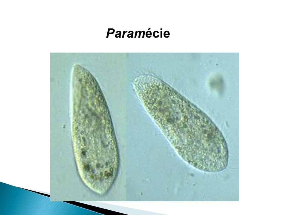 Paramécie