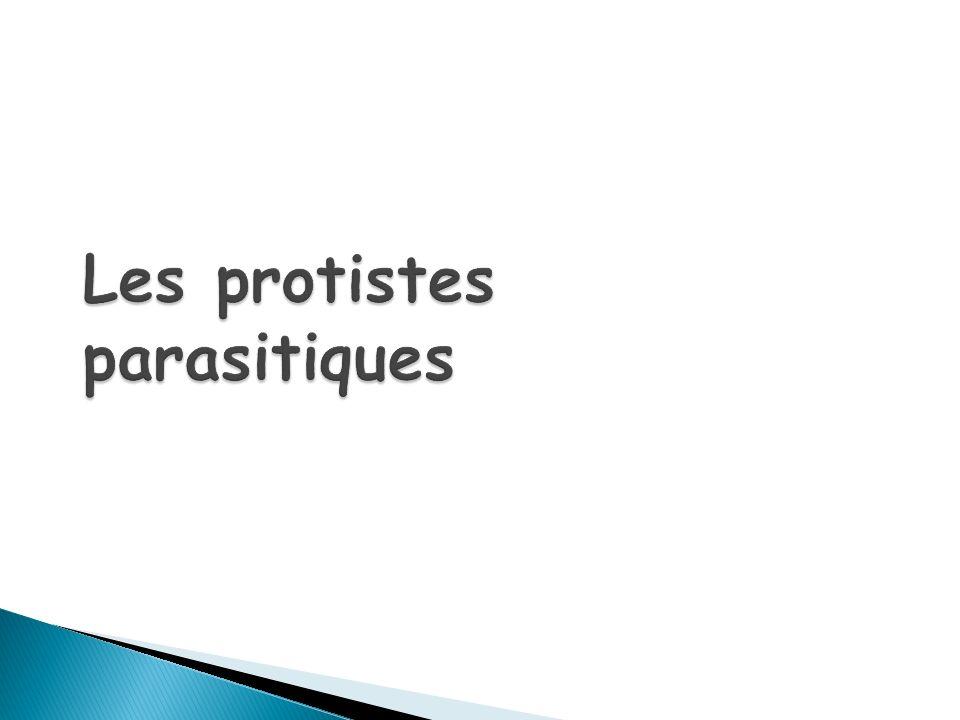 Les protistes parasitiques