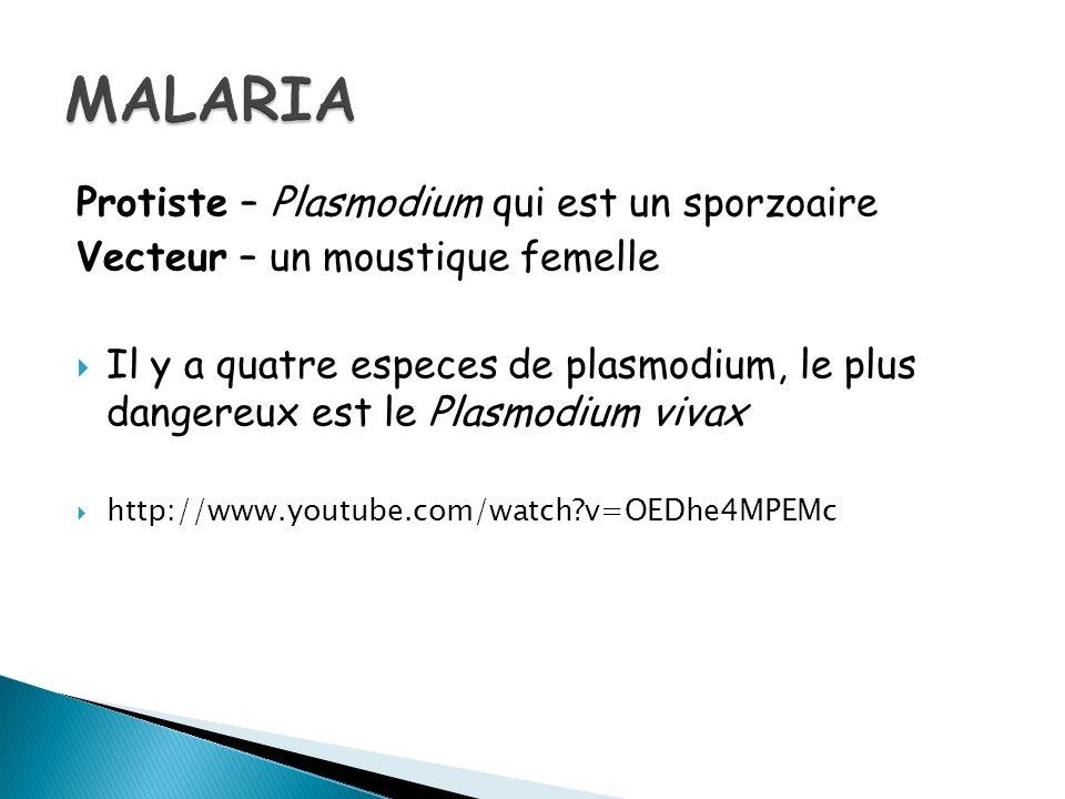 Protiste – Plasmodium qui est un sporzoaire Vecteur – un moustique femelle Il y a quatre especes de plasmodium, le plus dangereux est le Plasmodium vivax http://www.youtube.com/watch?v=OEDhe4MPEMc