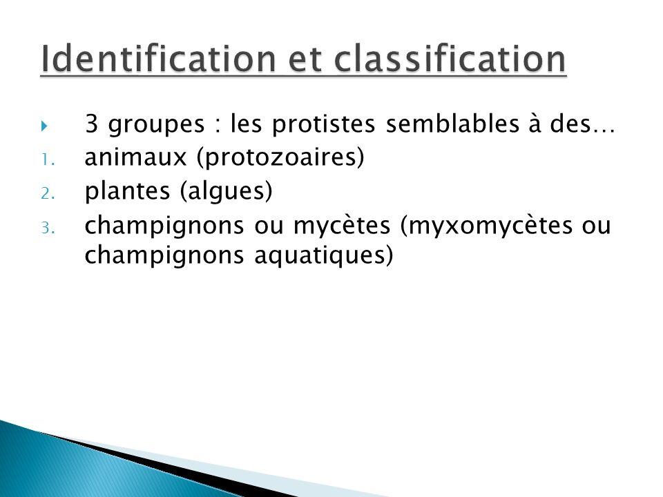 3 groupes : les protistes semblables à des… 1.animaux (protozoaires) 2.