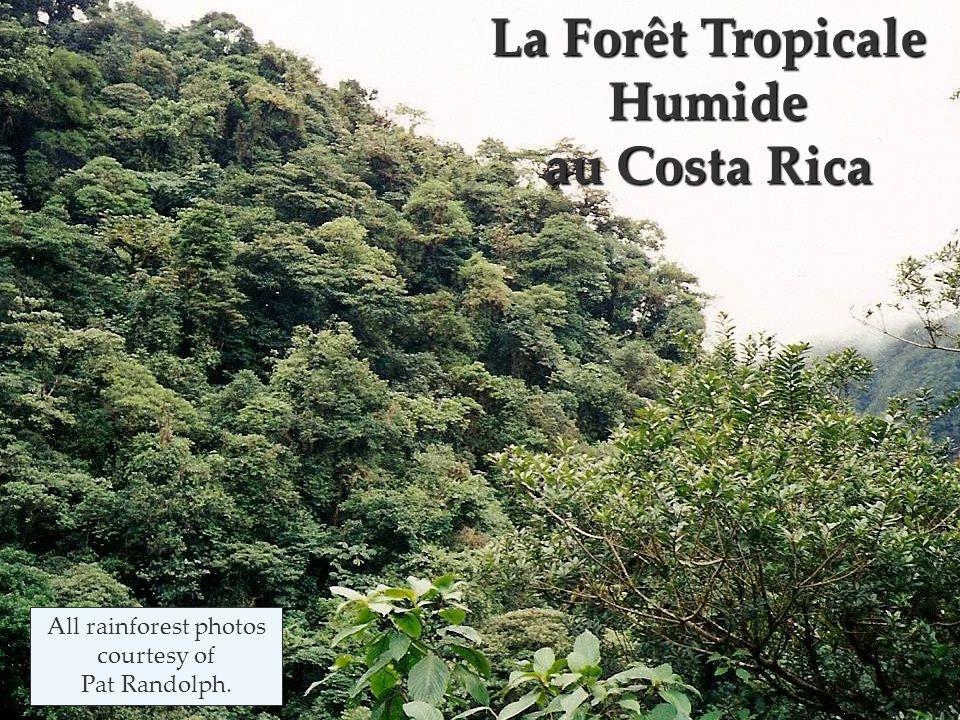 les grands arbres de la forêt tropicale
