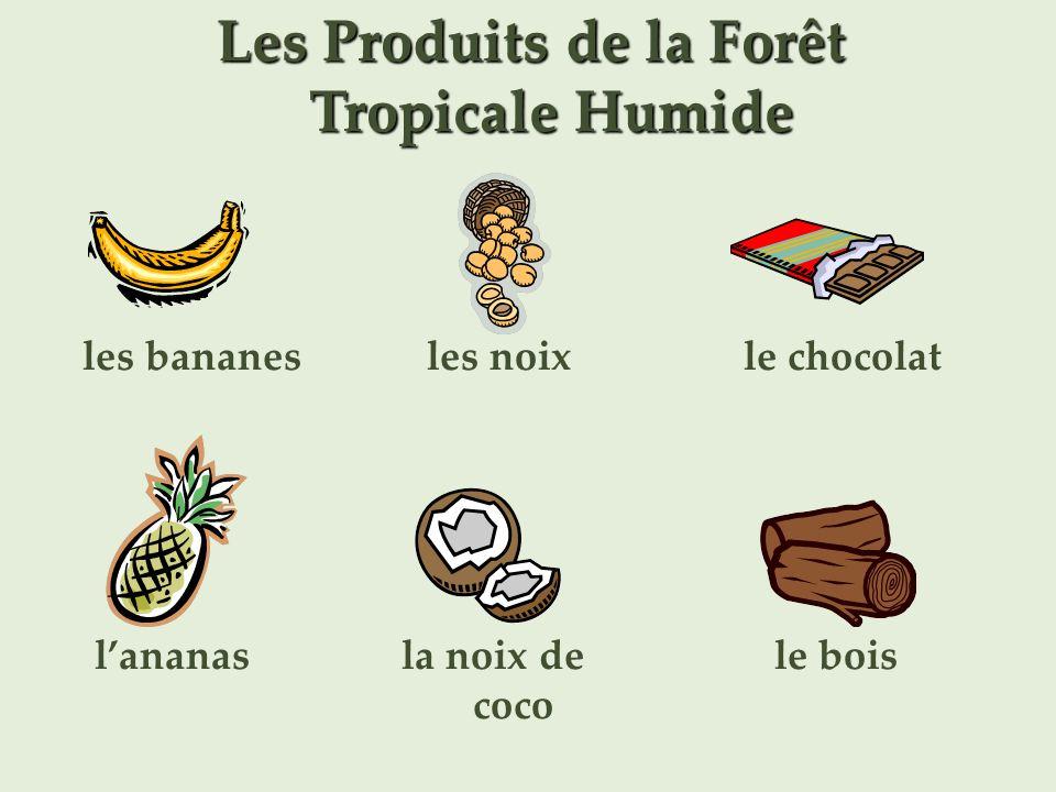 Les Produits de la Forêt Tropicale Humide les bananes lananas les noix la noix de coco le chocolat le bois