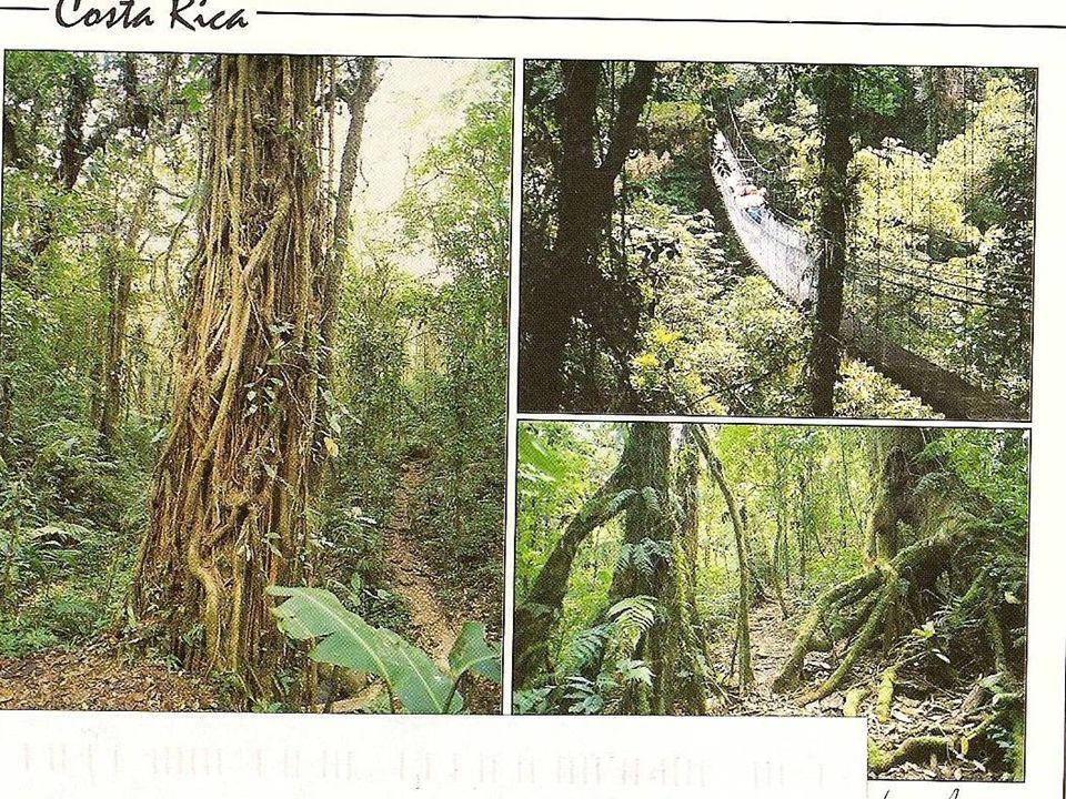 les chauves-souris de la forêt tropicale humide C
