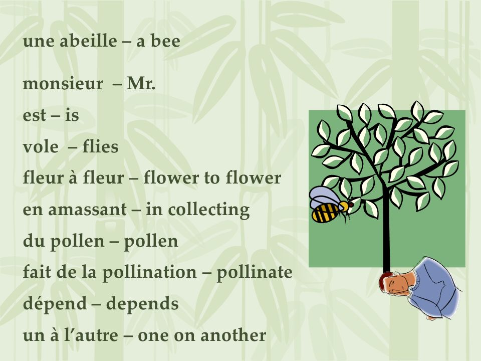 une abeille – a bee monsieur – Mr.