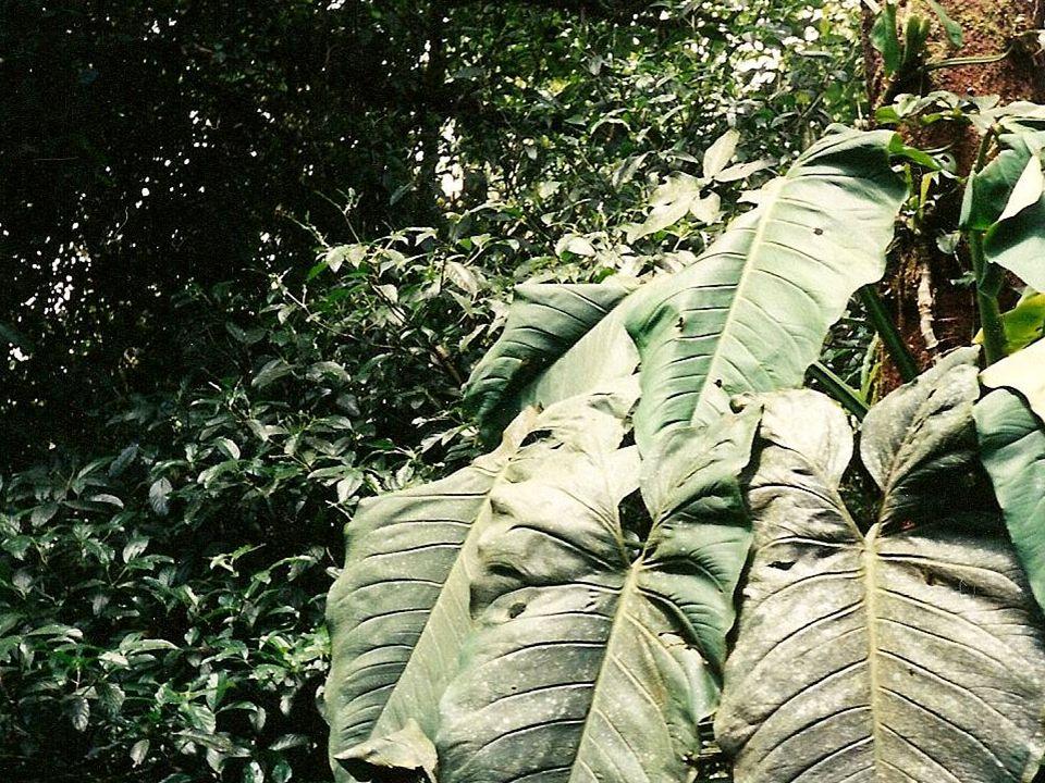 le paresseux de trois orteil les rayons de soleil la beauté – beauty une autre fois – again la forêt tropicale humide la pluie la grenouille les vies – the lives la nourriture – food des fourmiliers vos enfants – your children