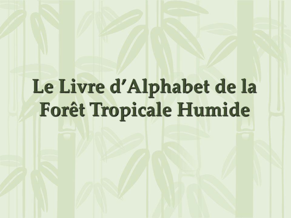 Le Livre dAlphabet de la Forêt Tropicale Humide