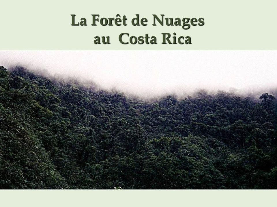 La Forêt de Nuages au Costa Rica