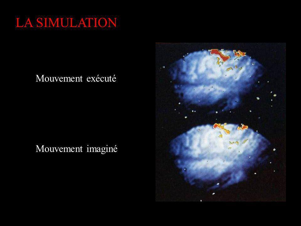 LA SIMULATION Mouvement exécuté Mouvement imaginé