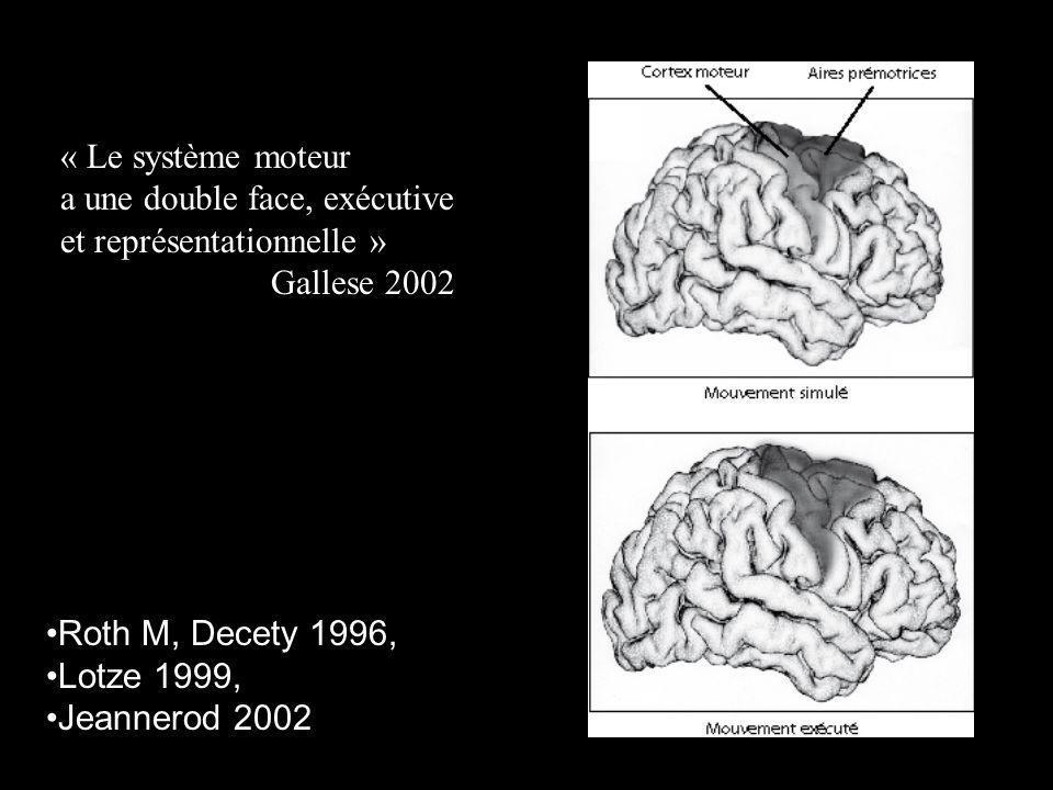 Roth M, Decety 1996, Lotze 1999, Jeannerod 2002 « Le système moteur a une double face, exécutive et représentationnelle » Gallese 2002