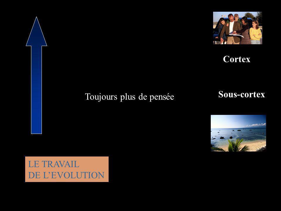 Cortex Sous-cortex LE TRAVAIL DE LEVOLUTION Toujours plus de pensée