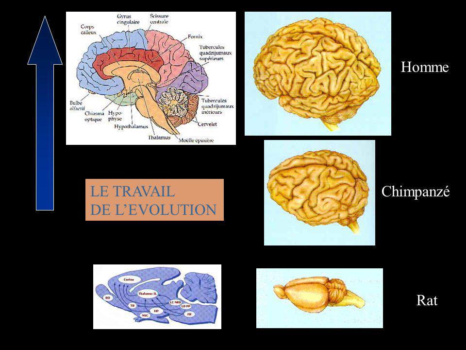 Wicker et al., Neuron 2003 Neurones miroirs et empathie de bas niveau Pas de contexte Pas de partage hétéro/autobiographique